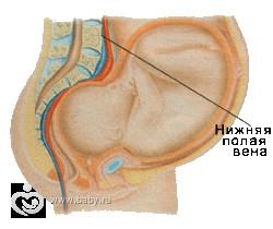 Где находится желудок при беременности