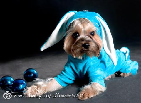 одежда для йорков с фото на собаке