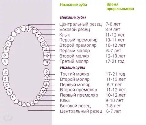 Расчет зубов для детей