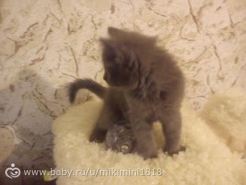 нашли котёнка)))