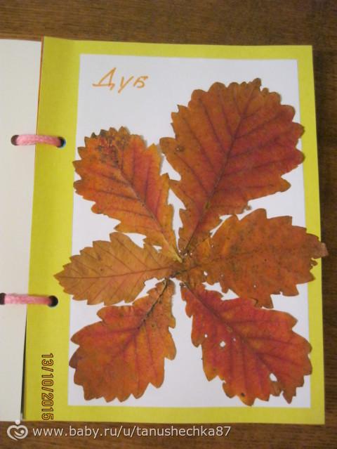 Гербарий из листьев для ясельной группы
