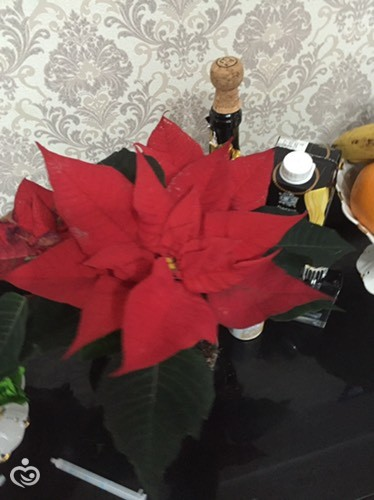 Цветочек на новый год))