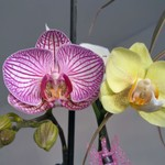 Мои орхидейки и поделка в школу