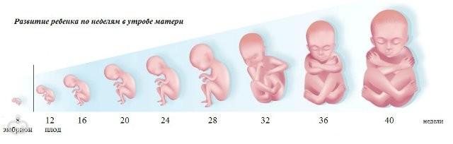Зувр при беременности