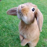 Жую Морковку