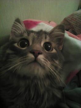 Орехово-Зуево найден котенок!!!!