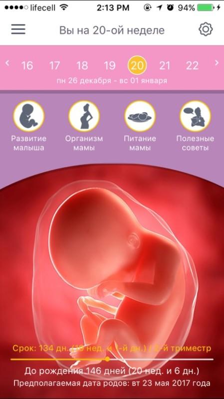 20 неделя беременности  описание узи размеры плода