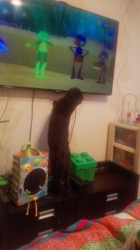 Кот Лунтика смотрит :-)