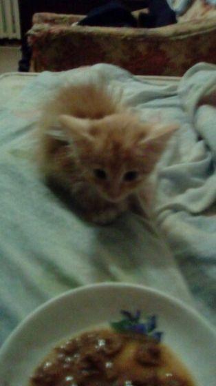 Нашли котёнка рыженького
